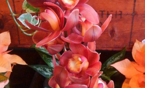 シンビジューム アカネ 4646農園は富山市粟島のフラワーショップお花屋さんです