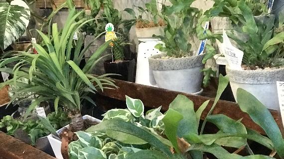 インテリアグリーン 4646農園は富山市粟島のフラワーショップお花屋さんです