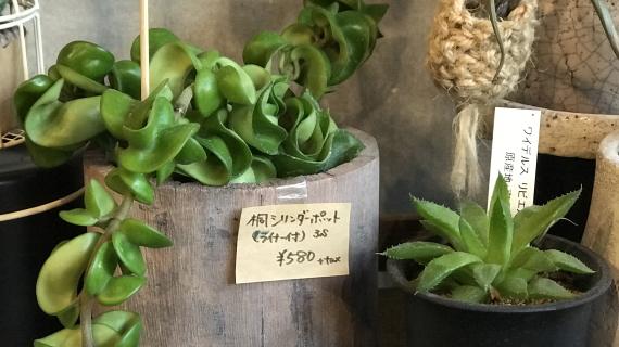 希少品種 4646農園は富山市粟島のフラワーショップお花屋さんです